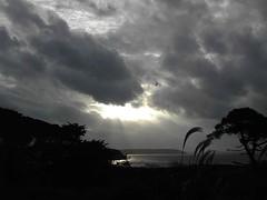 Winter Skies 1 (Trish McGrath) Tags: trees ireland sea plants beach water hookhead cowexford trishmcgrath
