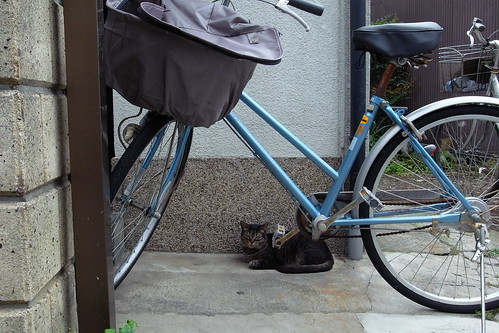 Today's Cat@20090712