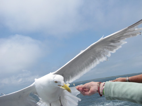 Hand feeding the gulls