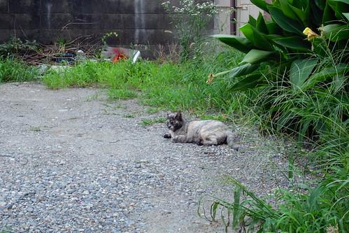 Today's Cat@20090720