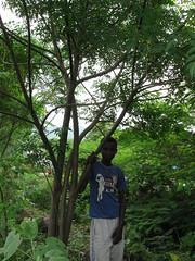 Adiso's son with neem tree