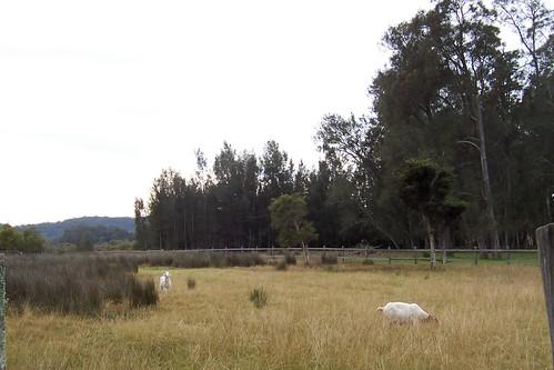 Palmers Lane Bensville