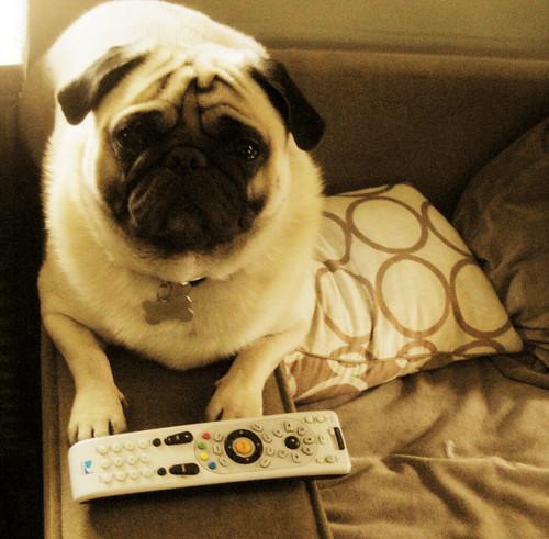 steve tv.