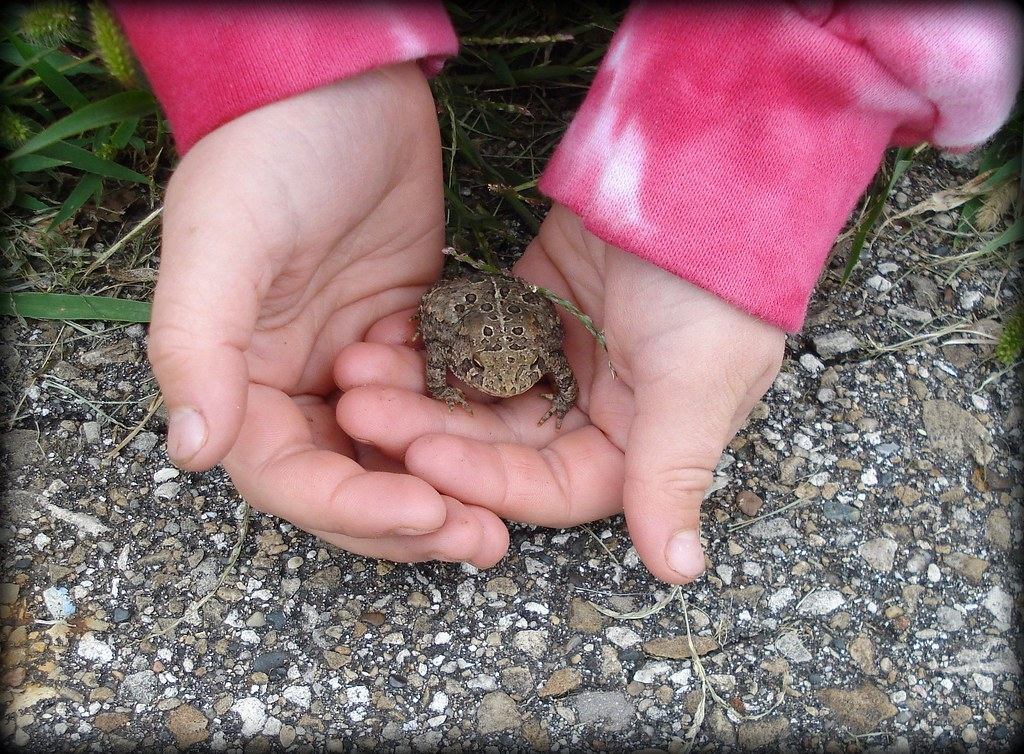 toad in hands