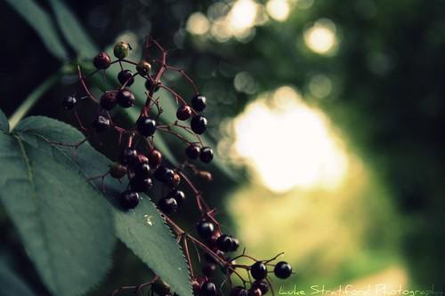 Summer Berry.