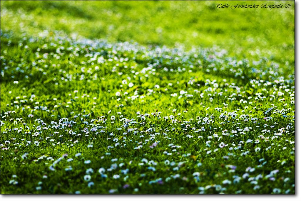 3909163935 5d8eb720f9 o Green fields