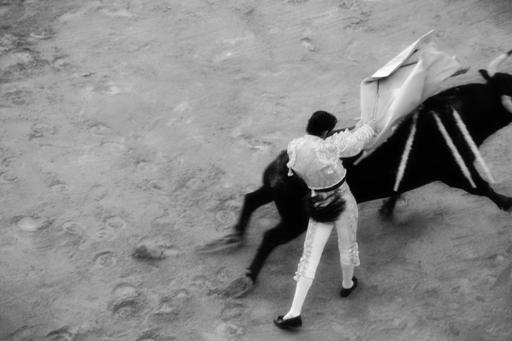 bull fight- BW tail slap