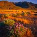 Steens Mountain Sunrise.