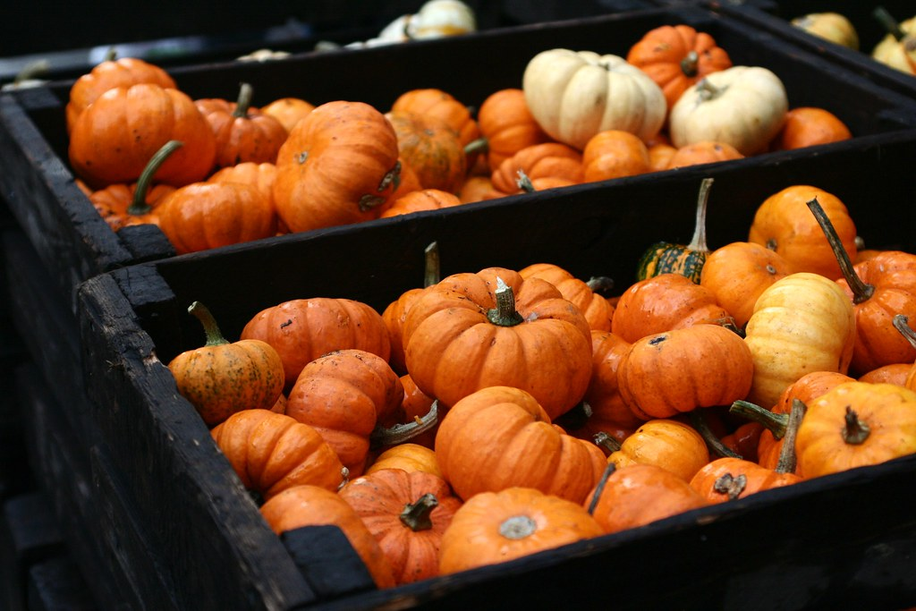 Pumpkins - Union Square Fair
