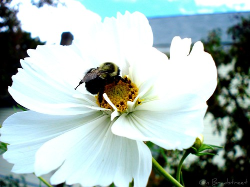 blustery day bee