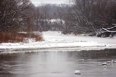 Chagrin River Metro Park (DBCoop77) Tags: winter ohio snow river soe chagrinriver blueribbonwinner otw willoughbyohio goldstaraward rubyphotographer