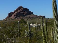 Papago Peak with Saguaros (alist) Tags: phoenix garden botanical desert alicerobison