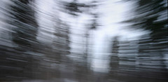 (-Antoine-) Tags: park trees winter snow canada motion blur tree nature forest movement blurry quebec snowy hiver sigma arbres motionblur qubec invierno neige 1020mm 2008 1020 foret arbre parc saguenay gauthier fort flou mouvement chicoutimi wintery sigma1020mm bouge sigma1020 rosaire hivernal rosairegauthier saguenaylacstjean saguenaylacsaintjean rosairegaut006 antoinerouleau