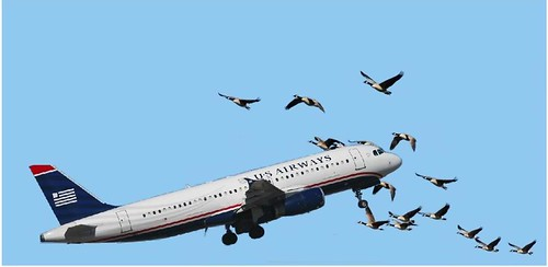 US Airways Violates Federal Migratory Bird Laws