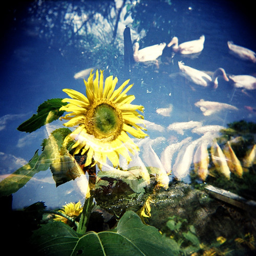 <Holga>Flower and Fish