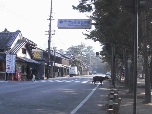 早朝の東大寺(鹿たち)-17