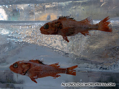 More rotten fishes