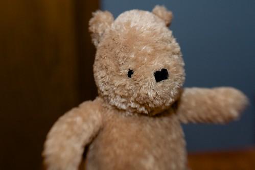 blurry bear