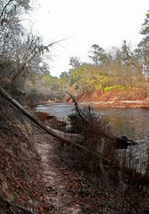 Bank of the Suwannee River (Chris C. Crowley) Tags: water river florida scenic touristattractions suwanneeriver walkinginbeauty chriscrowley onlythebestare raccontarelanatura everywherewalks celticsong22 scenicsnotjustlandscapes whitespringsfl picsforpeace stephenfostermemorialpark bankofthesuwanneeriver