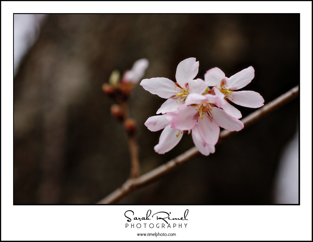 buds and blooms 06