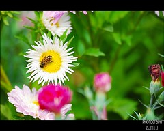 In search of .. (Ajith ()) Tags: white flower co