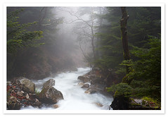 Mist, Mount Taygetus, Greece (Christos Andronis) Tags: travel light mountain tree green water colors forest canon landscape 350d stream greece peloponnese taygetos   lakonia