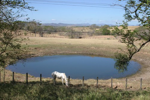 Horse + water hole