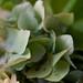 0903 bouquets #6
