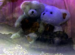teddy bear romance