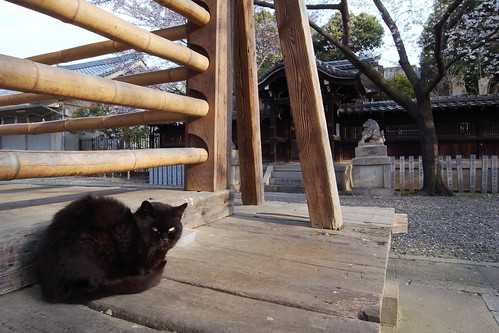 Today's Cat@20090401