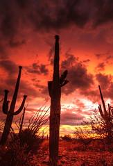 (Silent Observer) Tags: sunset red arizona cactus sky cloud sonora desert dusk d70s monsoon northamerica saguaro hue hdr 088 santacatalina 3xp tonemap tokina1116mmf28