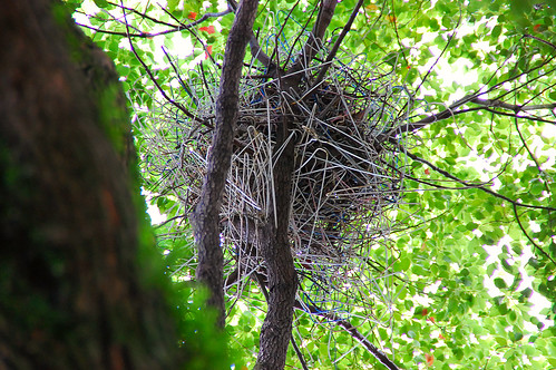 Crow's Nest Make Out of Hangers by pokoroto