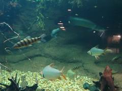 Smithsonian Trip - Woodley Park Zoo (ShashiBellamkonda) Tags: woodleyparkzoo dczoo