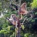 Woodland Park Zoo Seattle 042