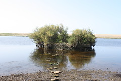 The passage of time.. (Panic_Button) Tags: trees reflection beach nature water dorset steppingstones chesilbeach chesil moonfleet