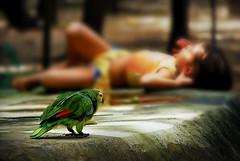 O Sonho de Mofeu (Mrcio Anderson) Tags: sleeping cidade brazil color animal brasil cores children nikon dof bokeh flagra interior pssaro ave stio criana d200 menina 2009 sombras sono dormindo papagaio fora nordeste ppc cansao piau teresina foco sesta pontodevista morfeu 13671 18135mm nazaria deitados conceto mrcioanderson fotgrafoamador piauphotoclube simultneos