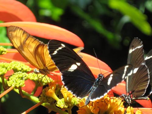 Butterfly Garden 044