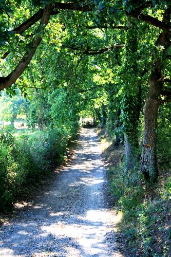 Leafy Chemin