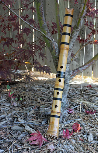 Shakuhachi under the Japanese maple