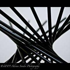 Wooden Bowl (Adriano Alessandro) Tags: wood blackandwhite bw black sticks bowl