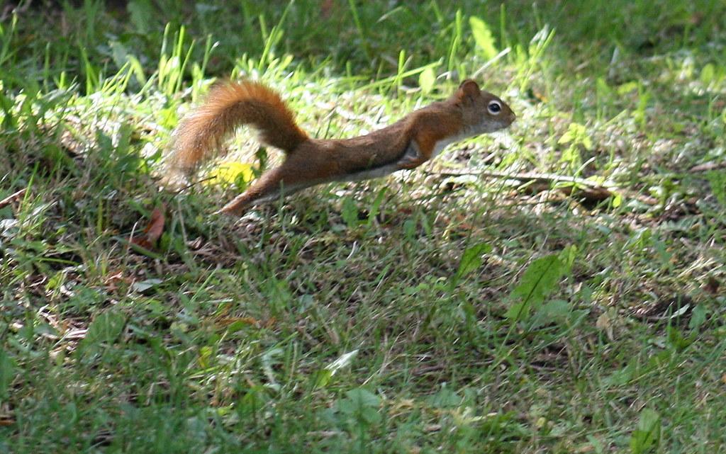 speedy squirrel