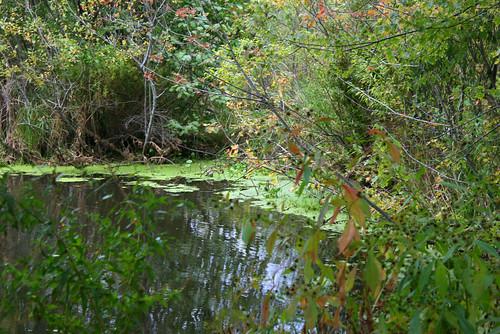 mba swamp