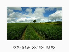 Cool Green Scottish Fields - Tayside (Magdalen Green Photography) Tags: blue green scotland tayside prettyclouds greenfields scottishlandscape coolgreen cooltrees calmnaturescene iaingordon scottishfields dsc1376 coolgreenscottishfields