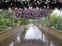 Coming Wet Into the Garden (slipgrove) Tags: bridge flowers autumn wet october pattern purple path entrance cbg chicagobotanicgarden october20 slipgrove