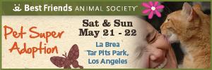 Pet Super Adoption announcement