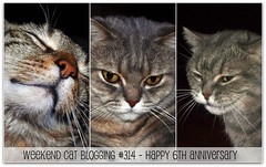 Weekend Cat Blogging #314 - Happy 6th Anniversary