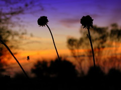 Nuray and jaciii_2051 (jaciii (off&on)) Tags: flowers friends sunset silhouette spider louisiana outofthisworld shiningstar thefarm pictureperfect otw mrrogersneighborhood ultimateshot superphotos flickrdiamond excellentphotographer dreamwithme theunforgettablepictures theperfectphotographer beautyunnoticed pofpop11 fotofanaticus yourbestoftoday saariysqualitypictures themasterphotographer betterthantheirbests mirellaandsonjagonewild vipveryimportantphotos theunforgettable3pictures worldsartgallery nurayandjaciii thebeautyofsilhouettesandshadows 3wordcomments~summersunfun admirableflickrs