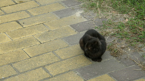 006.南雅社區小黑貓