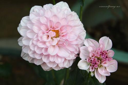 Flowers @ Big buddha