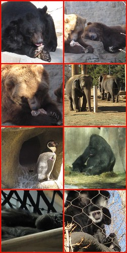 Denver Zoo Collage